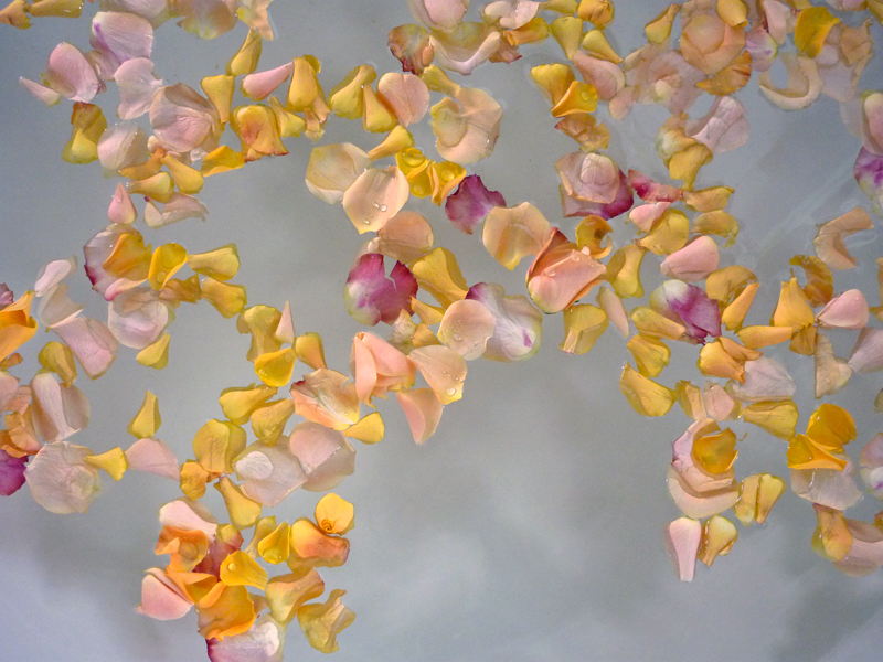 weleda-rosenblueten