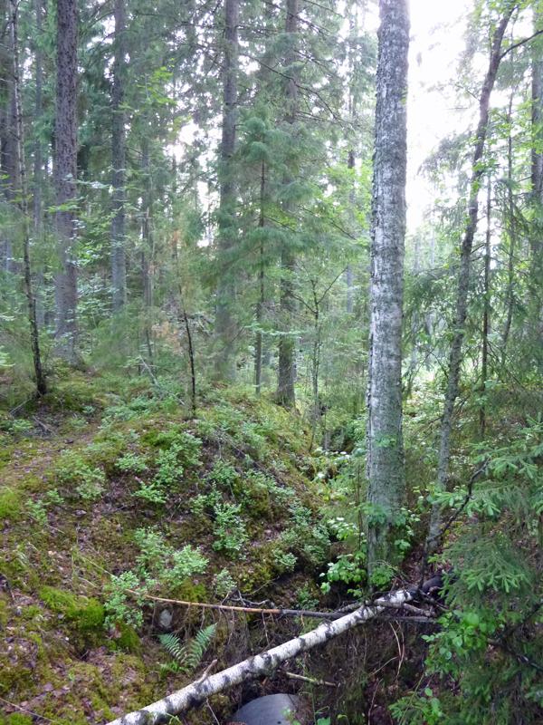 finnischer-wald