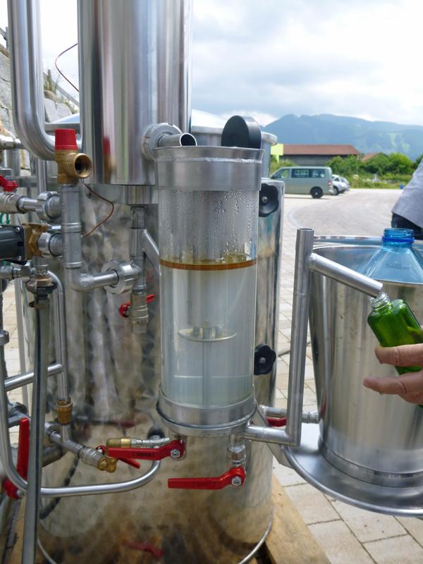 destillation-thymian