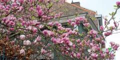 magnolie-spring-2014
