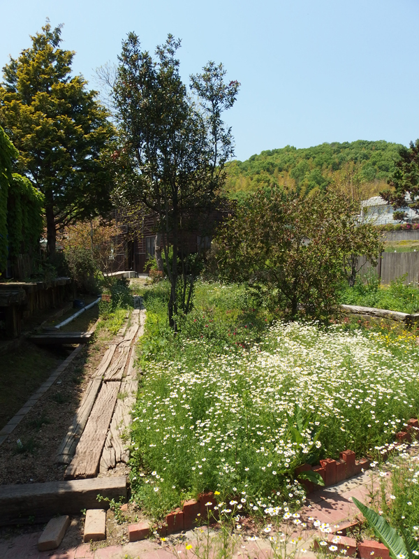kodera-herb-garden-may-2014