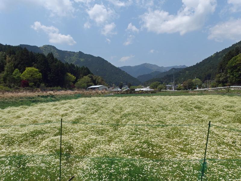 koderacho-fields