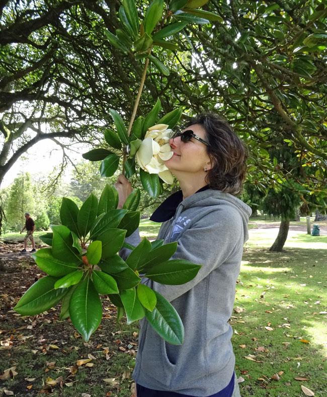 birgit-corall-magnolie