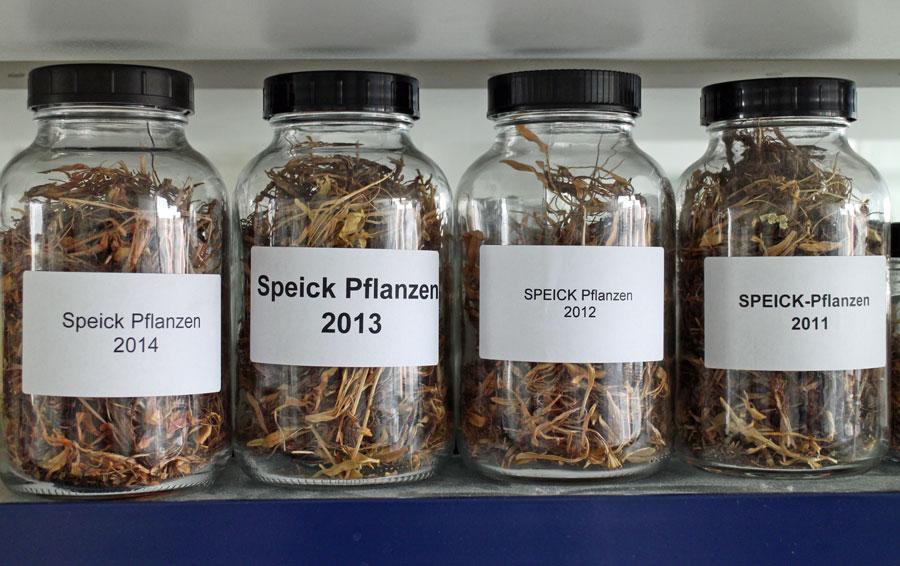 speick-pflanzen-jahrgaenge
