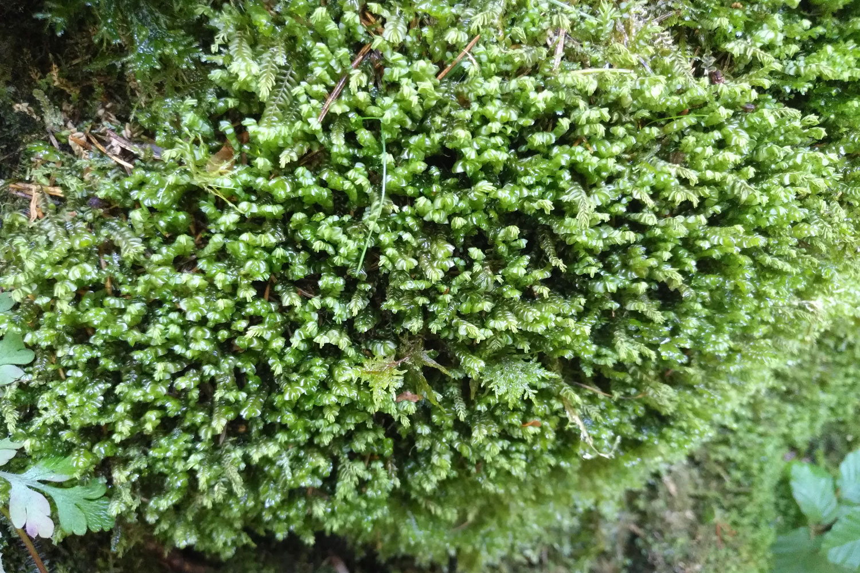 Moos im Wald Mibelle Biochemistry