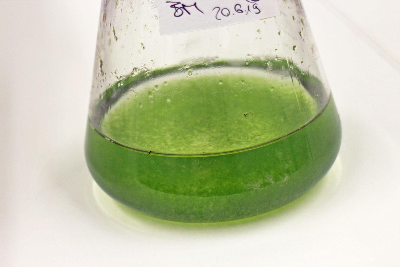 Moss Cell Tec Mibelle Biochemistry