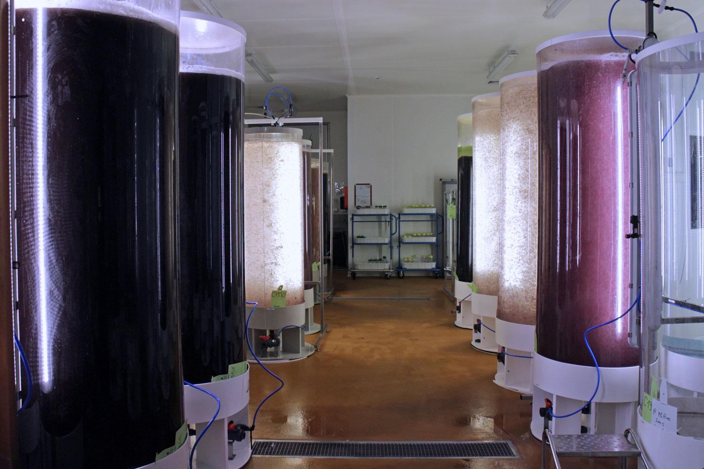 Phyto Reaktoren Codif