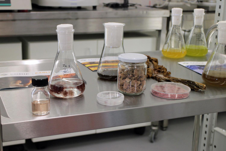 Marine Lab Codif
