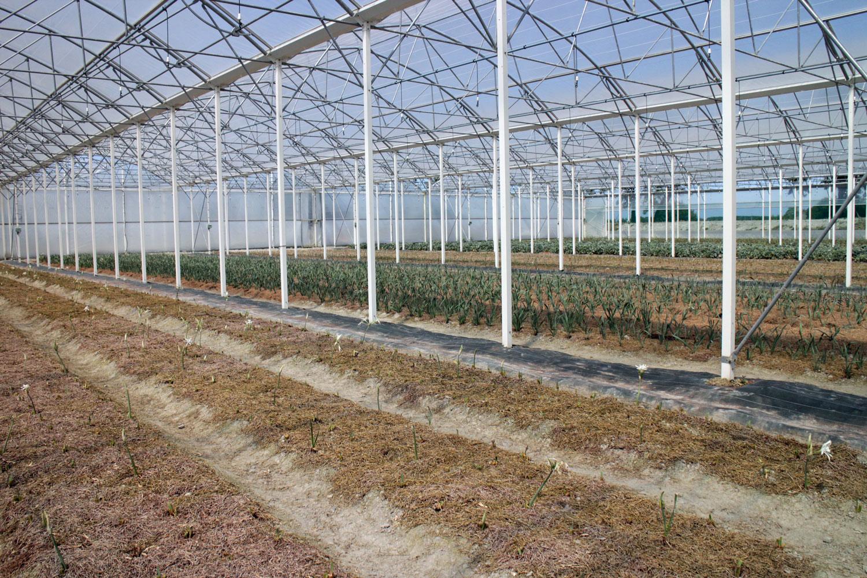 Codif Bretagne Cultivation