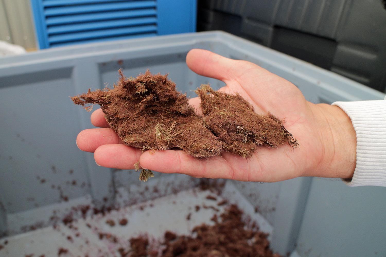 Codif Recycle Algae Waste
